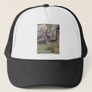 Rocky Mountain Big Horn Sheep Ewe Trucker Hat