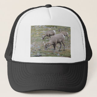 Rocky Mountain Big Horn Sheep Trucker Hat