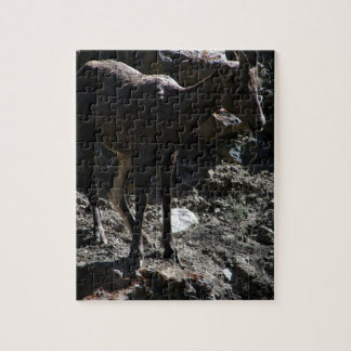 Rocky Mountain Bighorn Sheep, ewe Jigsaw Puzzle