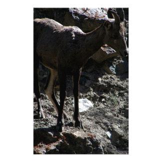 Rocky Mountain Bighorn Sheep, ewe Stationery