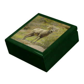 Rocky Mountain Bighorn Sheep Gift Box