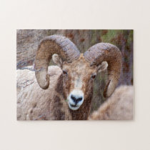 Rocky Mountain Bighorn Sheep Jigsaw Puzzle