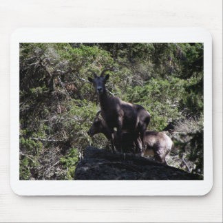 Rocky Mountain Bighorn Sheep, Keremeos, BC Mouse Pad