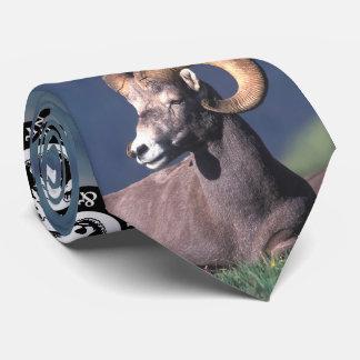 Rocky Mountain Bighorn Sheep Neck Tie