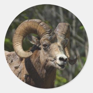 Rocky Mountain Bighorn Sheep Classic Round Sticker