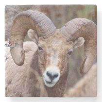 Rocky Mountain Bighorn Sheep Stone Coaster
