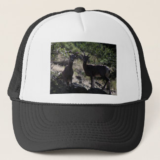 Rocky Mountain Bighorn Sheep Trucker Hat