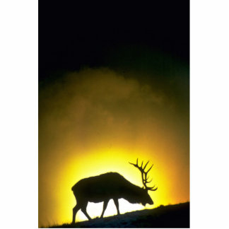 Rocky Mountain bull elk, Yellowstone National Park Photo Sculptures