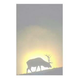 Rocky Mountain bull elk, Yellowstone National Park Stationery