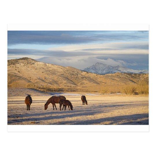 Rocky Mountain Colorado Country Morning Postcard