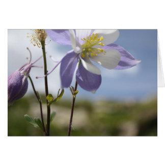 Rocky Mountain Columbine Colorado Wildflower Card