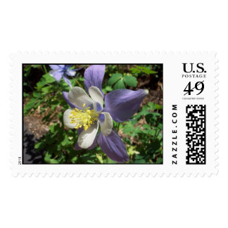 Rocky Mountain Columbine Postage Stamp