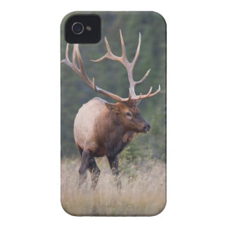 Rocky Mountain Elk Case-Mate iPhone 4 Case