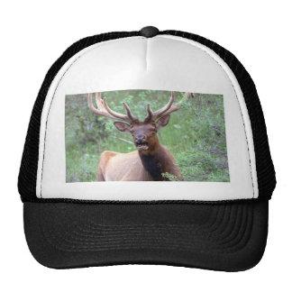Rocky Mountain Elk Hats