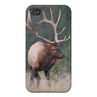 Rocky Mountain Elk iPhone 4/4S Case