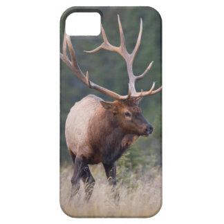 Rocky Mountain Elk iPhone SE/5/5s Case