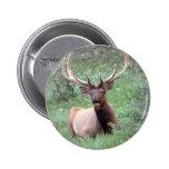 Rocky Mountain Elk Pins