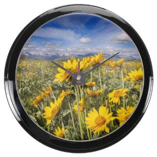 Rocky Mountain Front Range Aquavista Clocks