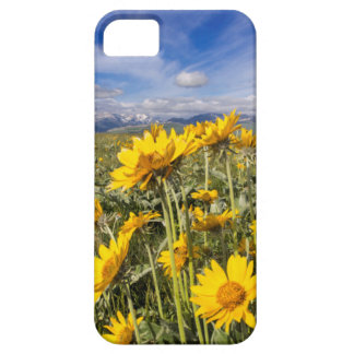 Rocky Mountain Front Range iPhone 5 Cases
