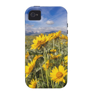 Rocky Mountain Front Range Vibe iPhone 4 Cover