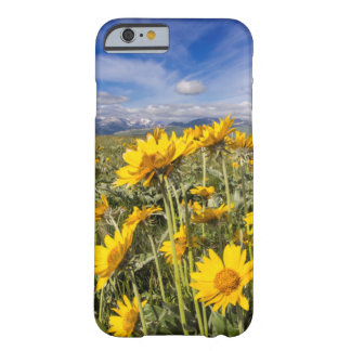 Rocky Mountain Front Range Barely There iPhone 6 Case