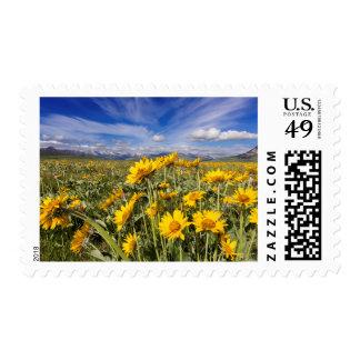 Rocky Mountain Front Range Postage