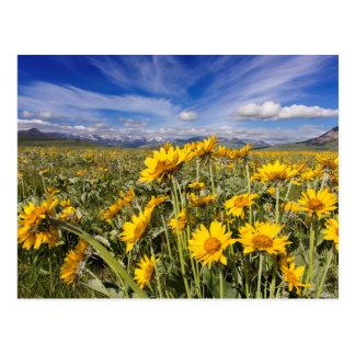 Rocky Mountain Front Range Postcard