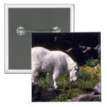 Rocky mountain goat 2 inch square button