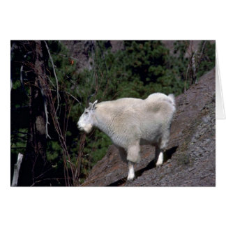 Rocky Mountain Goat-alert billy on mountainside Greeting Card
