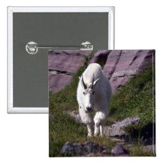 Rocky mountain goat button