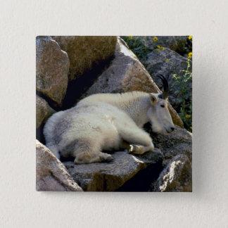 Rocky Mountain goat, Colorado Pinback Button