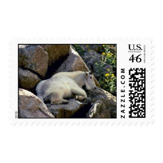 Rocky Mountain goat Colorado Postage Stamps