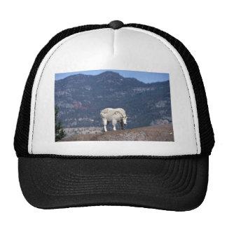 Rocky mountain goat (Female in transitional coat) Trucker Hat