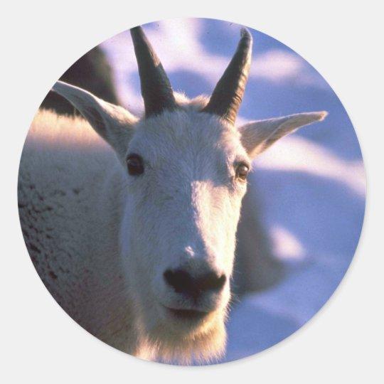 Rocky Mountain Goat Head Classic Round Sticker