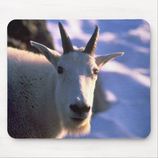 Rocky Mountain Goat Head Mouse Pad