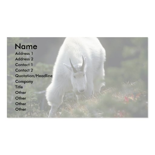 Rocky mountain goat (Large male) Business Card