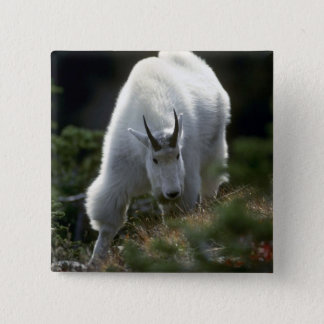 Rocky mountain goat (Large male) Button