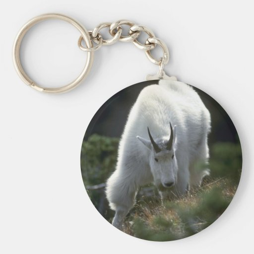Rocky mountain goat (Large male) Key Chain