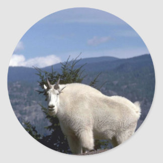 Rocky mountain goat (Large male on crest of mounta Classic Round Sticker