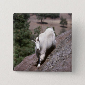 Rocky mountain goat (Male following game trail) Button