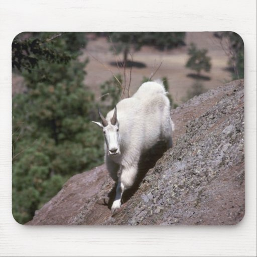 Rocky mountain goat (Male following game trail) Mousepads