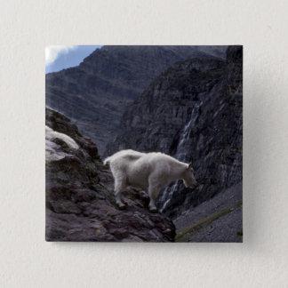 Rocky mountain goat (Pair on mountainside) Pinback Button