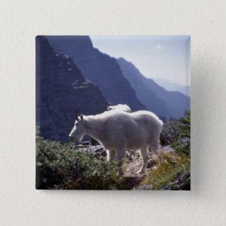 Rocky mountain goat pinback button