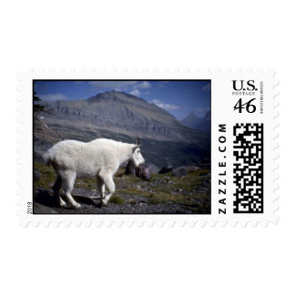 Rocky mountain goat postage stamps