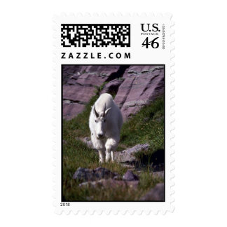 Rocky mountain goat stamp