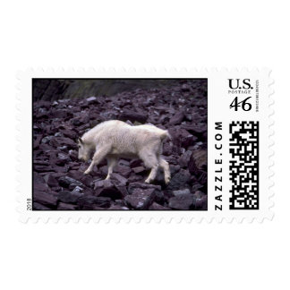 Rocky Mountain Goat Stamps