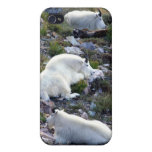 Rocky Mountain goats iPhone 4 Cases