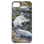 Rocky mountain goats iPhone 5 covers