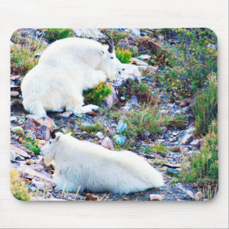 Rocky Mountain goats Mouse Pad
