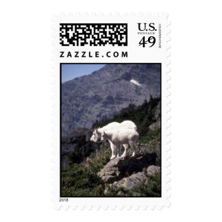 Rocky mountain goats (Nanny and kid) Stamp